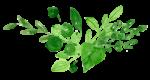 oliveier-fildes-saisons
